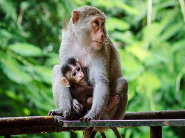 Nằm mơ thấy con khỉ chơi xổ số con gì may mắn