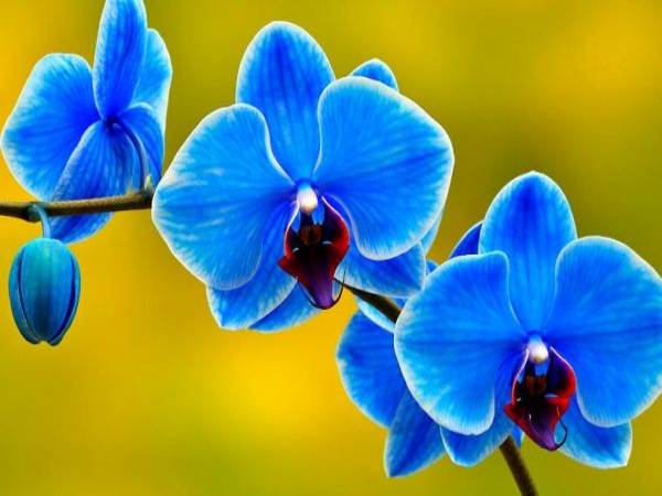 mo thay hoa lan (1)